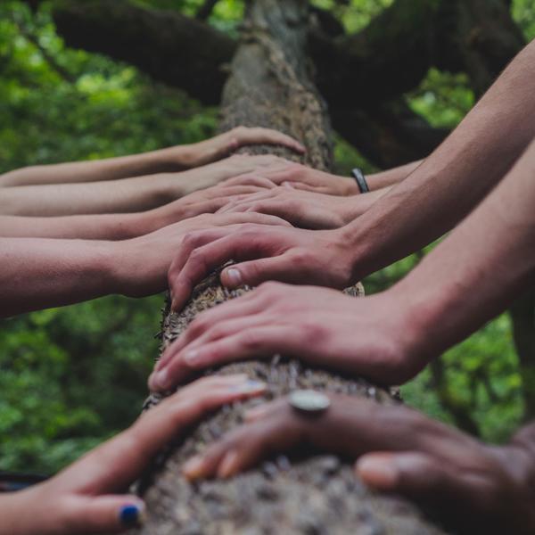 mani insieme su albero