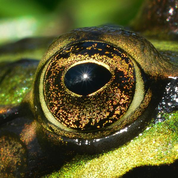 occhio animale esotico
