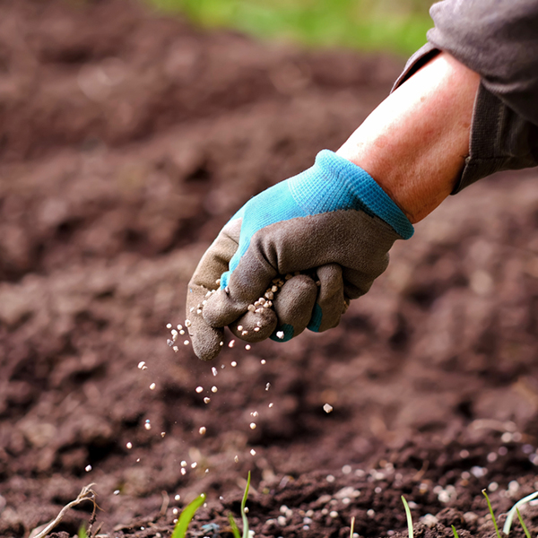 Senior woman applying fertilizer plant food to soil for vegetable and flower garden. Fertilizer and agriculture industry, development, economy and Investment growth concept.