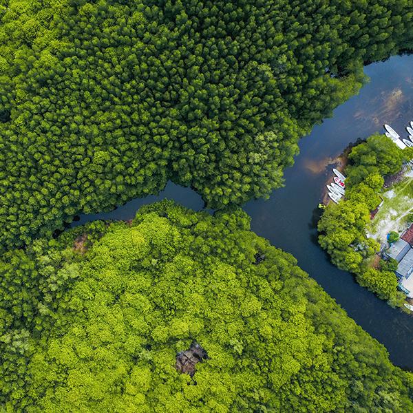 Mangrovie foresta